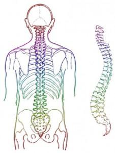 coloana-vertebrala-TaiChiChuan