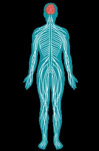 mintea-si-corpul