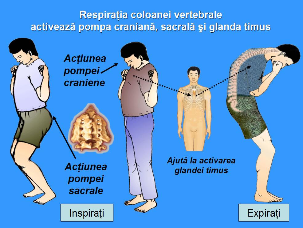 Remedii pentru rinichi