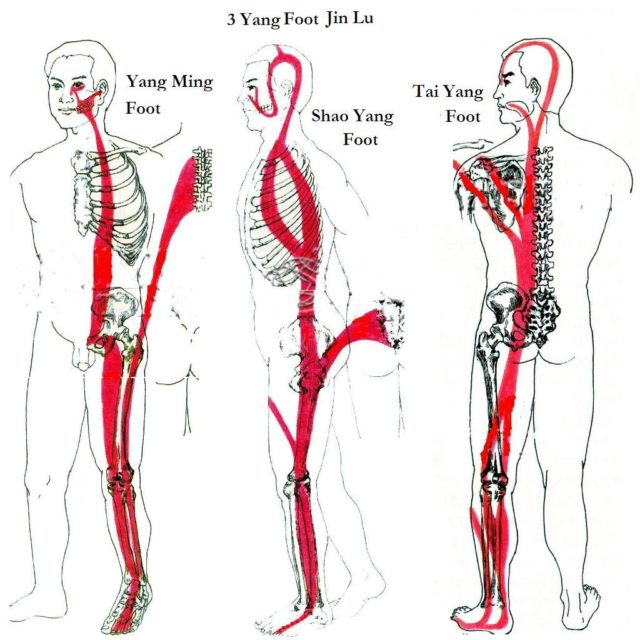 Meridiane tendino-musculare Jing Jin